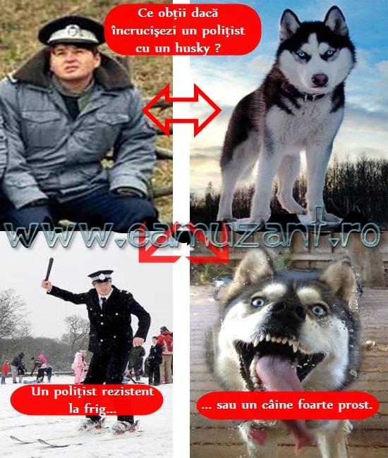 husky-politist